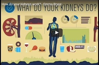 Kidneys – how they work