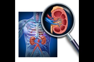 Kidneys - videos