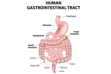 Digestive system – tests and procedures
